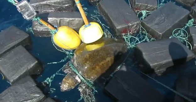 Sea Turtle Trapped in Floating Cocaine Bales